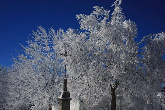 Frost of Trees